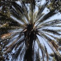 Pretty palm
